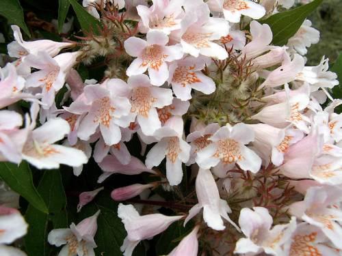http://flowers.ucoz.net/_ph/4/2/847241637.jpg